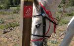 Capricho, uno de los caballos de Ecurrazín, junto a una baliza del Camino del Cid