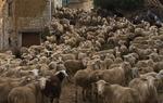 Rebaño de ovejas en la Pobla del Bellestar, Castellón / Joaquín Campos.