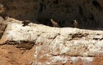 Buitreras cerca de Berlanga de Duero, en Soria / ALC