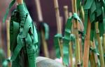 Las populares cañas adornadas de cintas verdes, antes de poner rumbo a la ermita de la Magdalena