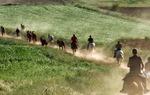 Recua de caballos en el Camino del Cid / Juan Antonio Bascón.