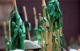 Populares cañas adornadas con cintas verdes