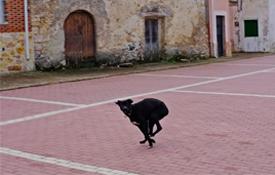 Plaza de la Iglesia, Fuembellida