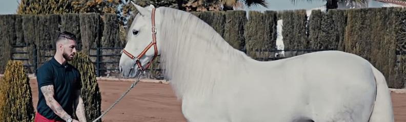 Yucatán, el caballo de Sergio Ramos, descendiente directo de Babieca (Imagen: Canal Youtube Sergio Ramos)