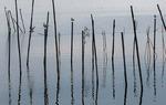 """La Albufera de Valencia es una laguna costera de poca profundidad rodeada de arrozales y cerrada al mar por una barra de arena. Su nombre proviene del árabe y significa """"mar pequeño"""" / Luis Moreno Morales."""